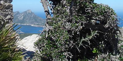 Bergwandern auf Mallorca